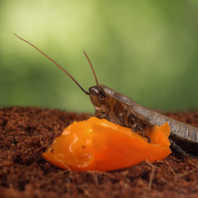 Honor Your Awful Ex By Naming A Roach After Them For Valentine's Day