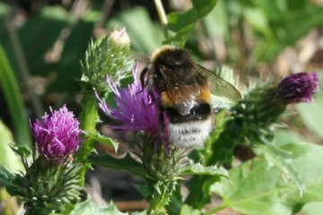Bumblebee Butts Are Adorable And The Internet Can't Get Enough Of Them
