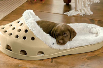 You Can Now Get Your Slipper-Loving Dog A Giant Croc-Shaped Bed