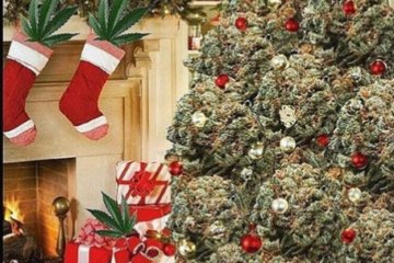 People Are Putting Up Weed Christmas Trees To Celebrate The Holidays