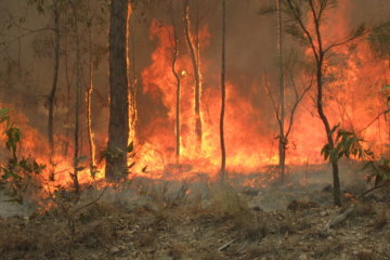 The Down Under Donation Dong Is Raising Serious Cash For The Australian Bushfires