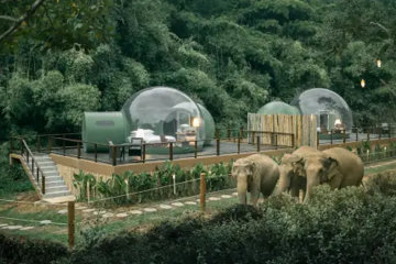 You Can Sleep In A See-Through Bubble In The Jungle Surrounded By Elephants
