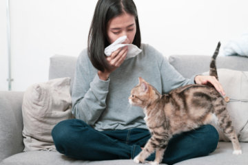New Cat Allergy Vaccine Could Help Reduce Or Eliminate Reactions