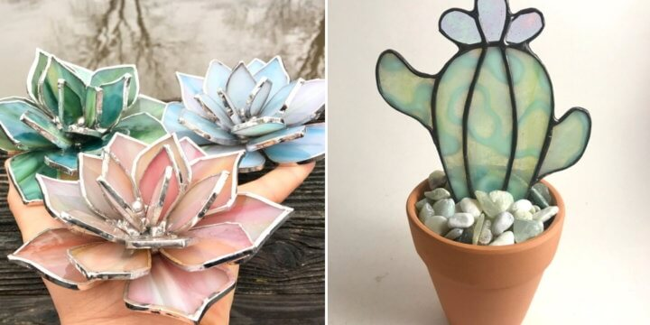 Stained Glass Cactus Succulent Plant