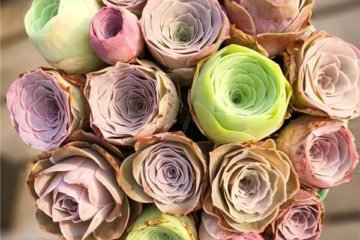 Rose Succulents Are The Perfect Way To Keep Your Favorite Flowers Around Forever
