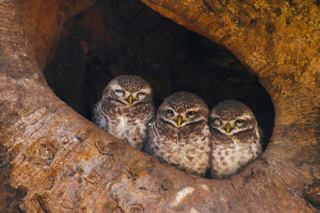People Are Just Discovering That Baby Owls Sleep Face-Down Because Their Heads Are Too Heavy