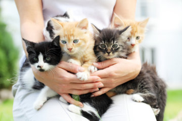 Cat With Split-Color Face Fathers Adorable Kittens In Each Color