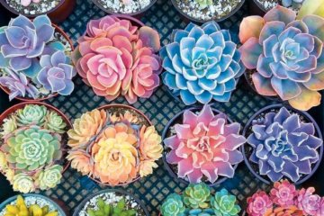 This 2,000 Piece Succulent Puzzle Is A Beautifully Colorful Addition To Your Real Plant Collection
