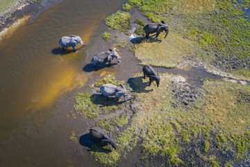 More Than 350 Elephants Found Dead In Botswana And No One Knows Why