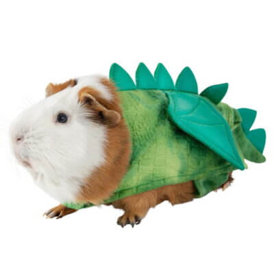 PetSmart Is Selling Halloween Costumes For Guinea Pigs And They're So Cute