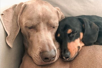 Dog With Severe Anxiety Gets His Own Emotional Support Puppy