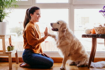 Most Pet Owners Have Canceled Plans To Hang Out With Their Dogs And Cats, Survey Finds