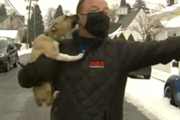 Adorable Puppy Named Pierogi Crashes Live Weather Report And People Can't Get Enough