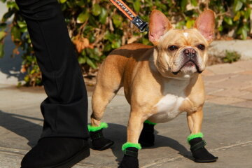 UGG Is Now Making Boots For Your Dog To Keep Their Paws Warm And Dry