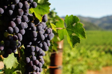 California Winery Will Pay You $10,000 A Month To Work And Live At Its Vineyard