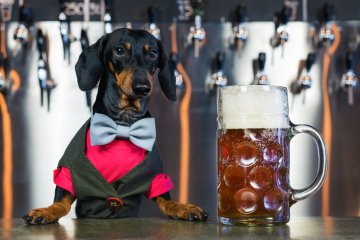Busch Is Looking For One Special Pup To Taste-Test Its Non-Alcoholic Dog Beer