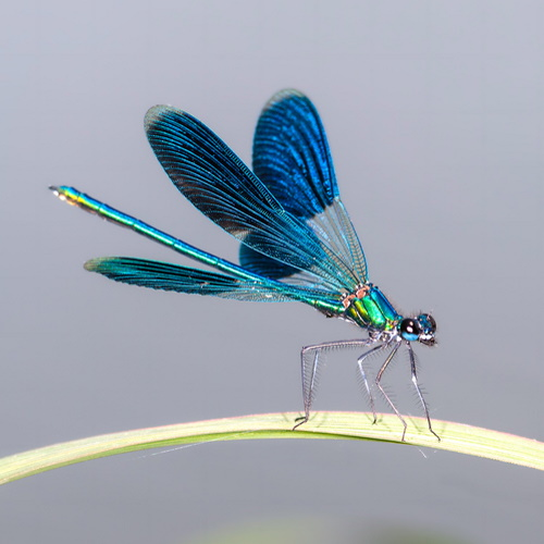 Dragonflies Are Symbols Of Deep Meaning And Emotion — Here's What Seeing One Signifies