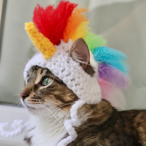 This Crochet Unicorn Hat For Cats Will Bring A Bit Of Magic To Your Pet's Life