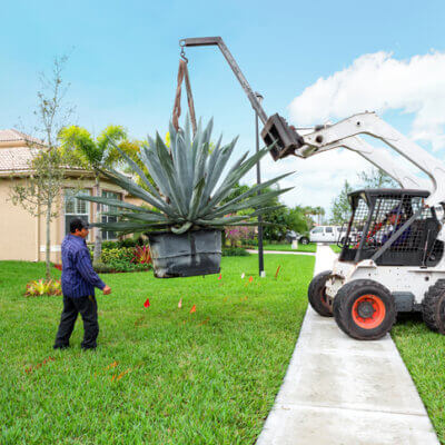 Giant Succulents Exist And They're A Larger-Than-Life Addition To Any Plant Lover's Home