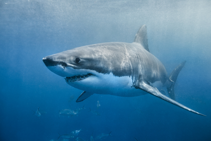 Australia Renames Shark Attacks 'Negative Encounters' To Change Public Perception Of The Animals As Monsters