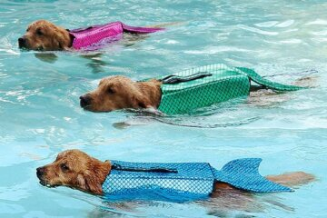 These Mermaid Life Jackets For Dogs Will Keep Your Pup Safe And Sparkly