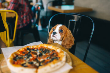 Restaurant Customer Spots Guy On Adorable Dinner Date With His Dog