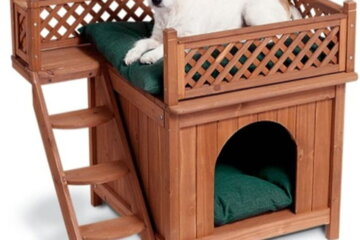 Dog Loft Beds Are Perfect For Pooches Who Hog All The Space On Your Mattress