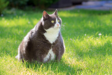 Woman Forced To Put Locks On Fridge To Keep 24-Pound Cat From Stealing Food